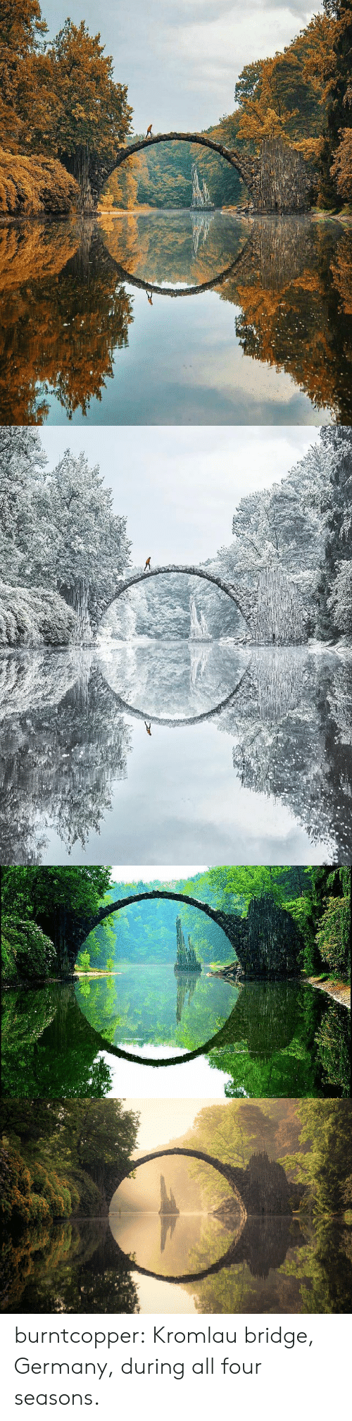 bridge: burntcopper: Kromlau bridge, Germany, during all four seasons.