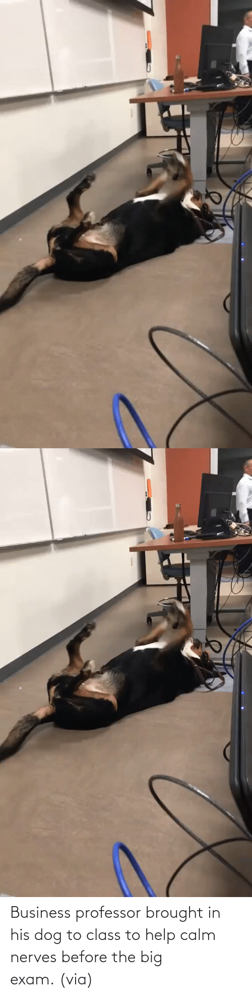 Before: Business professor brought in his dog to class to help calm nerves before the big exam. (via)