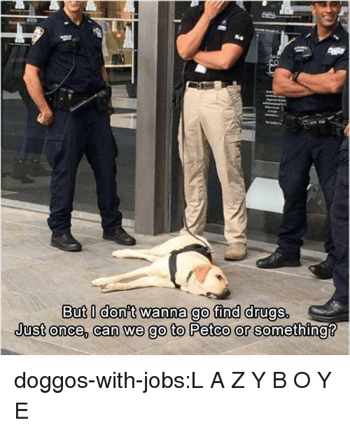 Drugs, Tumblr, and Blog: But l donit wanna go find drugs.  Just onee, can we go to Petco or se doggos-with-jobs:L A Z Y B O Y E