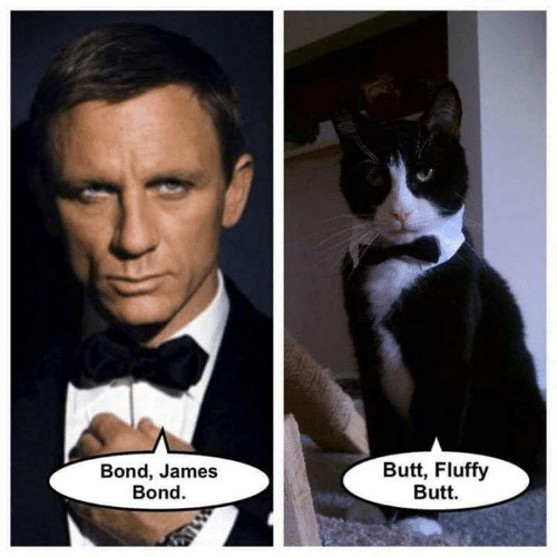 James Bond: Butt, Fluffy  Butt  Bond, James  Bond