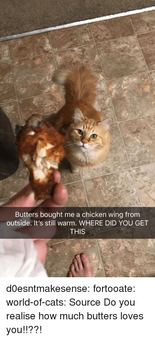 butters: Butters bought me a chicken wing from  outside. It's still warm. WHERE DID YOU GET  THIS d0esntmakesense:  fortooate:  world-of-cats: Source   Do you realise how much butters loves you!!??!