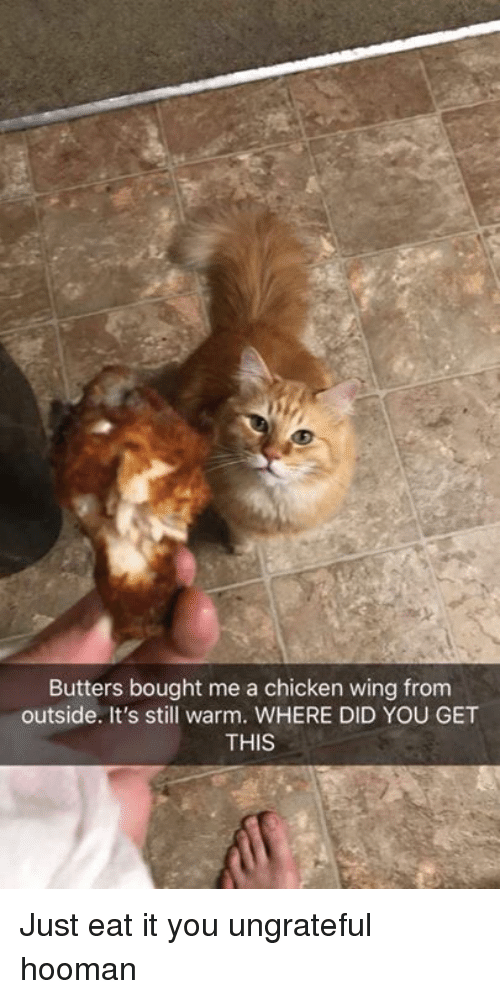 butters: Butters bought me a chicken wing from  outside. It's still warm. WHERE DID YOU GET  THIS Just eat it you ungrateful hooman