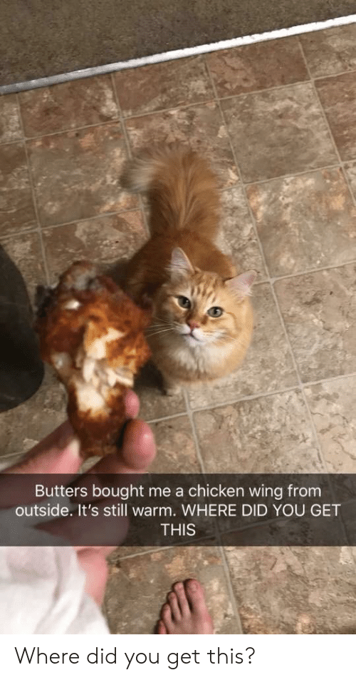 butters: Butters bought me a chicken wing from  outside. It's still warm. WHERE DID YOU GET  THIS Where did you get this?