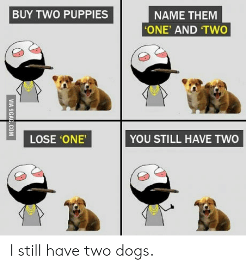 Name Them: BUY TWO PUPPIES  NAME THEM  'ONE' AND 'TWO  LOSE ONE  YOU STILL HAVE TWO  VIA 9GAG.COM I still have two dogs.
