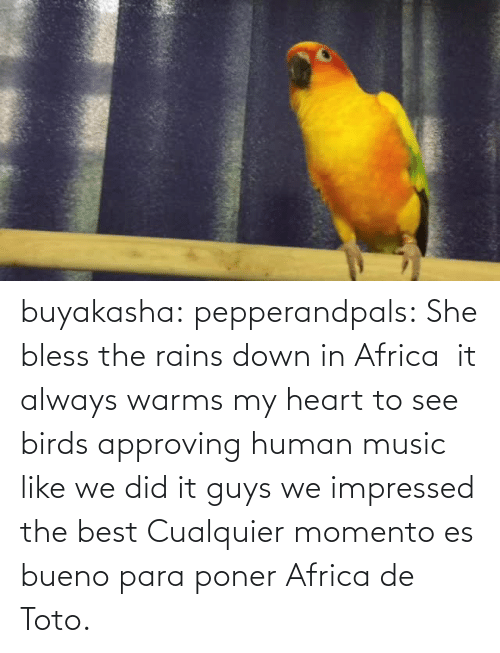 bless: buyakasha:  pepperandpals: ‪She bless the rains down in Africa ‬ it always warms my heart to see birds approving human music like we did it guys we impressed the best  Cualquier momento es bueno para poner Africa de Toto.
