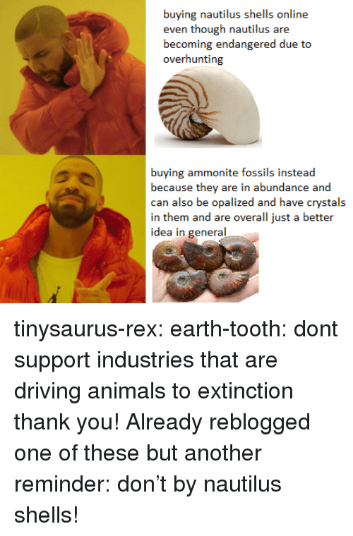 Better Idea: buying nautilus shells online  becoming endangered due to  overhunting  buying ammonite fossils instead  because they are in abundance and  can also be opalized and have crystals  in them and are overall just a better  idea in general tinysaurus-rex:  earth-tooth: dont support industries that are driving animals to extinction thank you!  Already reblogged one of these but another reminder: don't by nautilus shells!