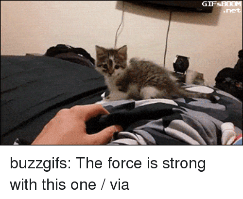 Target, Tumblr, and Blog: buzzgifs:  The force is strong with this one / via
