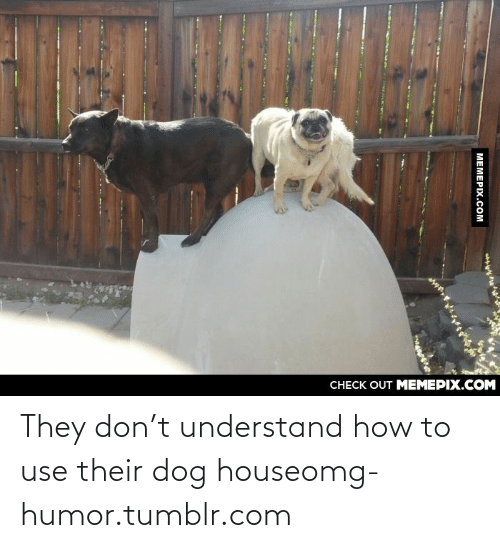 T Understand: CНЕCK OUT MЕМЕРІХ.COM  MEMEPIX.COM They don't understand how to use their dog houseomg-humor.tumblr.com
