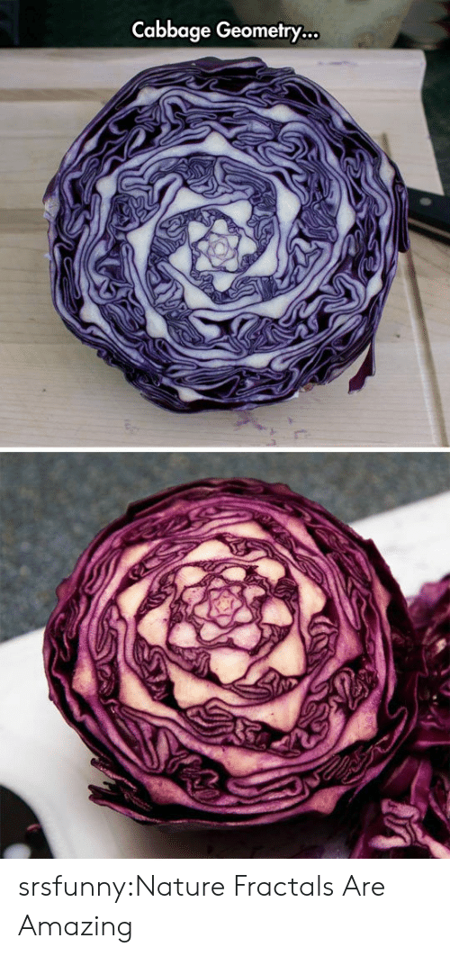 geometry: Cabbage Geometry... srsfunny:Nature Fractals Are Amazing