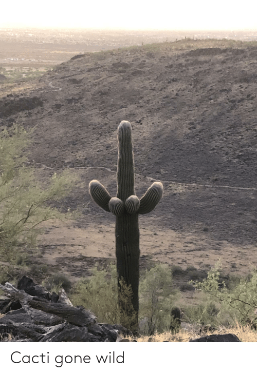 gone: Cacti gone wild