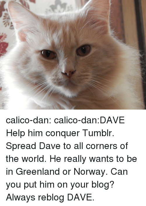 Tumblr, Blog, and Help: calico-dan:  calico-dan:DAVE Help him conquer Tumblr. Spread Dave to all corners of the world. He really wants to be in Greenland or Norway. Can you put him on your blog? Always reblog DAVE.
