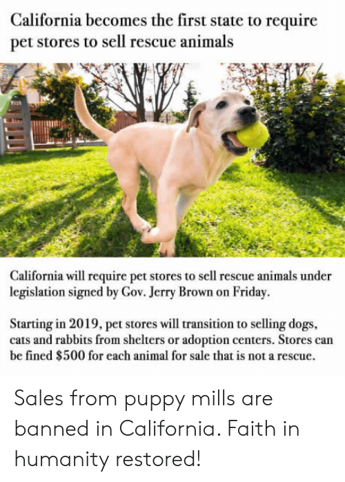 Animals, Cats, and Dogs: California becomes the first state to require  pet stores to sell rescue animals  133  California will require pet stores to sell rescue animals under  legislation signed by Gov. Jerry Brown on Friday.  Starting in 2019, pet stores will transition to selling dogs  cats and rabbits from shelters or adoption centers. Stores can  be fined $500 for each animal for sale that is not a rescue. Sales from puppy mills are banned in California. Faith in humanity restored!