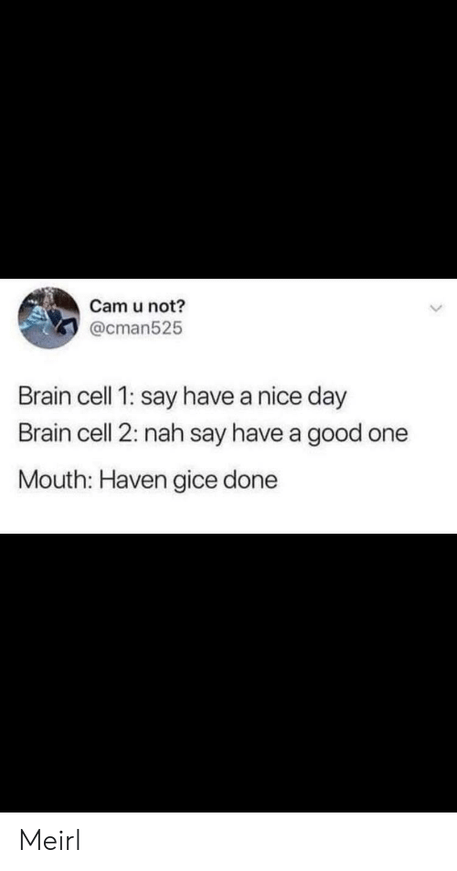 Brain, Good, and MeIRL: Cam u not?  @cman525  Brain cell 1: say have a nice day  Brain cell 2: nah say have a good one  Mouth: Haven gice done Meirl