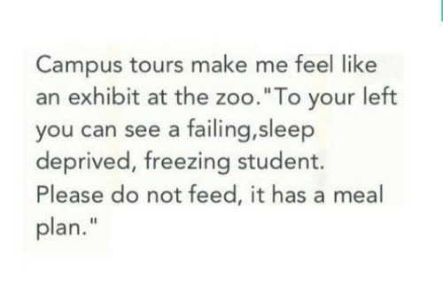 """Sleep, Freezing, and Zoo: Campus tours make me feel like  an exhibit at the zoo.""""To your left  you can see a failing,sleep  deprived, freezing student.  Please do not feed, it has a meal  plan."""""""