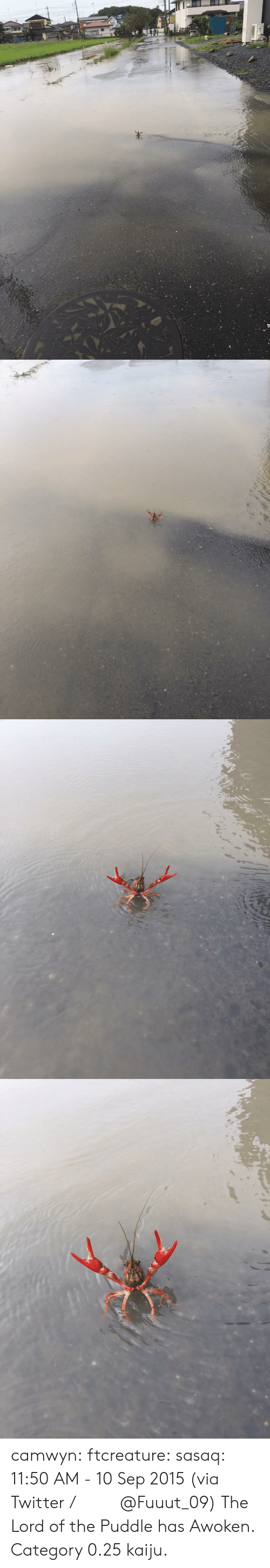 10 Sep: camwyn:  ftcreature:  sasaq:  11:50 AM - 10 Sep 2015 (via Twitter / ふ み な @Fuuut_09)   The Lord of the Puddle has Awoken.  Category 0.25 kaiju.