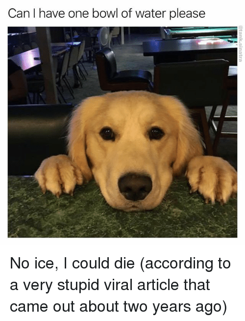 No Ice: Can I have one bowl of water please No ice, I could die (according to a very stupid viral article that came out about two years ago)