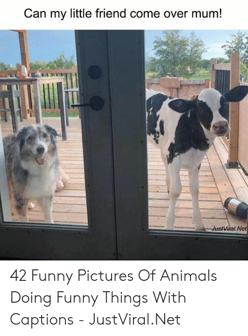 Animals, Come Over, and Funny: Can my little friend come over mum!  JustViral.Net 42 Funny Pictures Of Animals Doing Funny Things With Captions - JustViral.Net