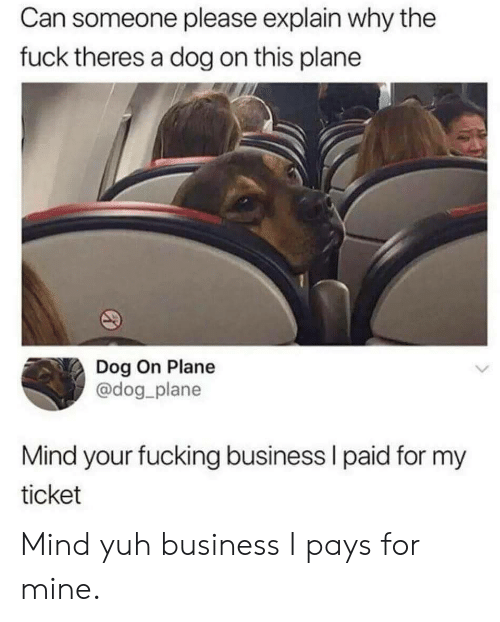Dog On: Can someone please explain why the  fuck theres a dog on this plane  Dog On Plane  @dog plane  Mind your fucking business l paid for my  ticket Mind yuh business I pays for mine.