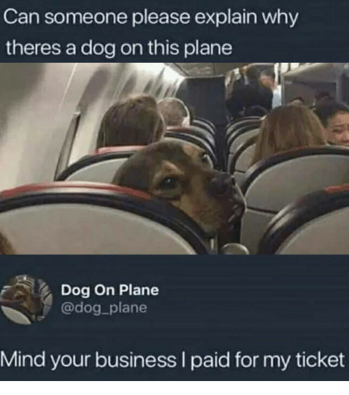 Business, Mind, and Dog: Can someone please explain why  theres a dog on this plane  Dog On Plane  @dog plane  Mind your business I paid for my ticket