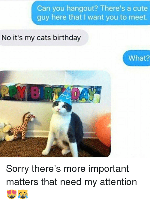 Birthday, Cats, and Cute: Can you hangout? There's a cute  guy here that I want you to meet.  No it's my cats birthday  What? Sorry there's more important matters that need my attention😻😹