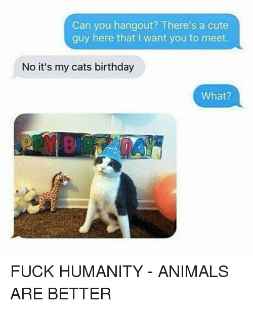 Animals, Birthday, and Cats: Can you hangout? There's a cute  guy here that I want you to meet  No it's my cats birthday  What? FUCK HUMANITY - ANIMALS ARE BETTER