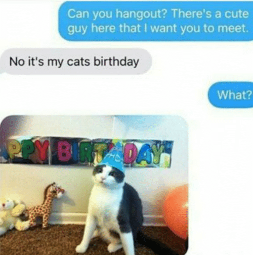 Birthday: Can you hangout? There's a cute  guy here that I want you to meet.  No it's my cats birthday  What?  PPY BRTADAY