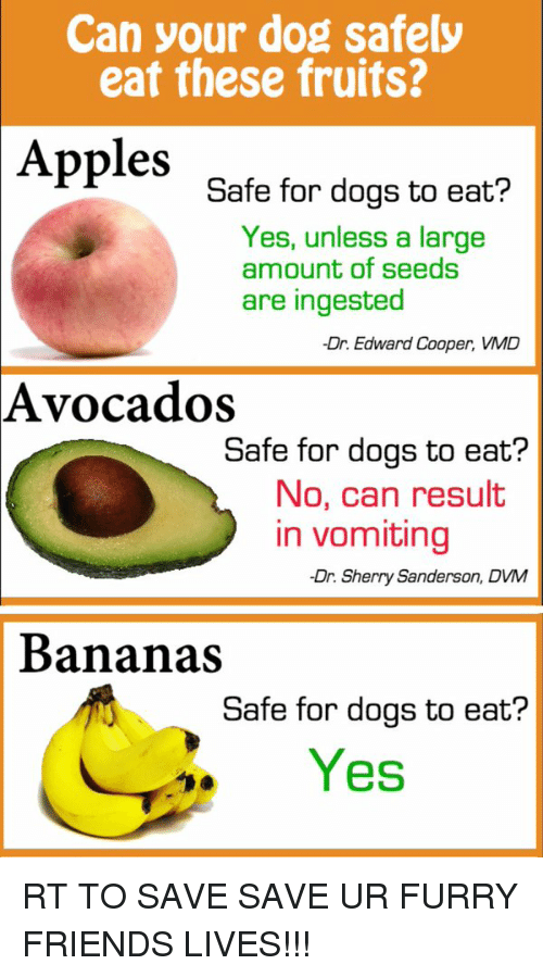 dvm: Can your dog safely  eat these fruits?  Apples  Safe for dogs to eat?  Yes, unless a large  amount of seeds  are ingested  -Dr. Edward Cooper, VMD  Avocados  Safe for dogs to eat?  No, can result  in vomiting  -Dr. Sherry Sanderson, DVM  Bananas  Safe for dogs to eat?  Yes RT TO SAVE SAVE UR FURRY FRIENDS LIVES!!!