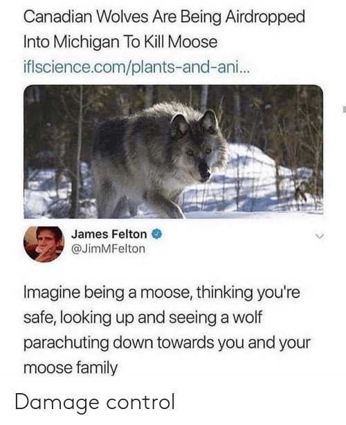 Family, Control, and Michigan: Canadian Wolves Are Being Airdropped  Into Michigan To Kill Moose  iflscience.com/plants-and-ani...  James Felton  @JimMFelton  Imagine being a moose, thinking you're  safe, looking up and seeing a wolf  parachuting down towards you and your  moose family Damage control