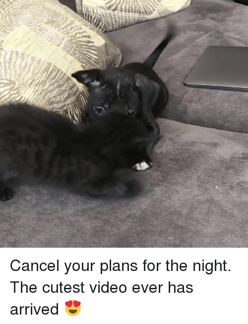 Video, For, and Cutest: Cancel your plans for the night. The cutest video ever has arrived 😍