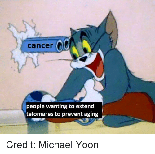 Memes, Cancer, and Michael: cancer  people wanting to extend  telomares to prevent aging Credit: Michael Yoon