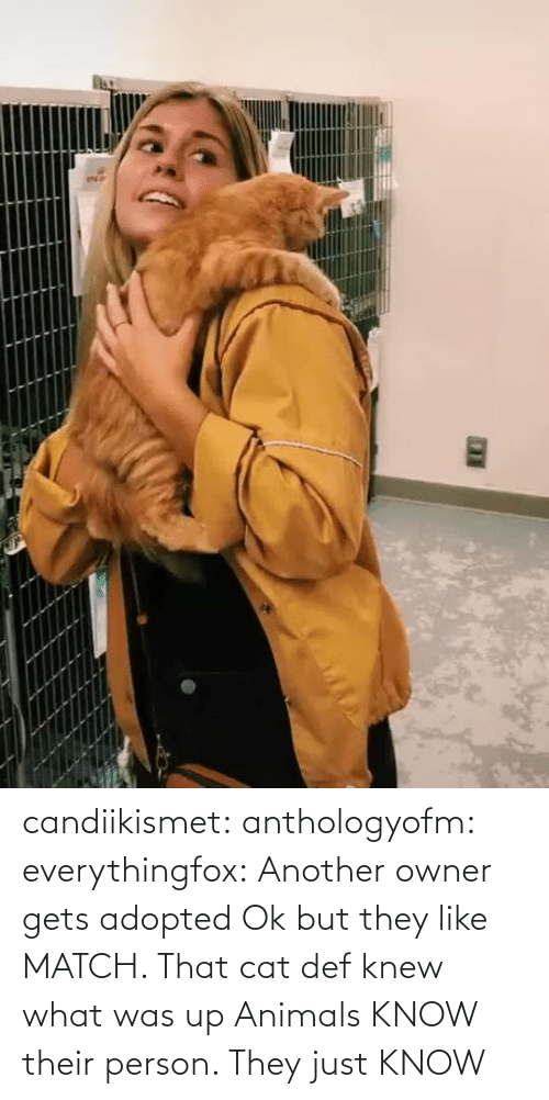 aww: candiikismet:  anthologyofm:  everythingfox:   Another owner gets adopted  Ok but they like MATCH. That cat def knew what was up   Animals KNOW their person. They just KNOW