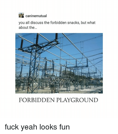 Looks Fun: caninemutual  you all discuss the forbidden snacks, but what  about the...  it  FORBIDDEN PLAYGROUND fuck yeah looks fun