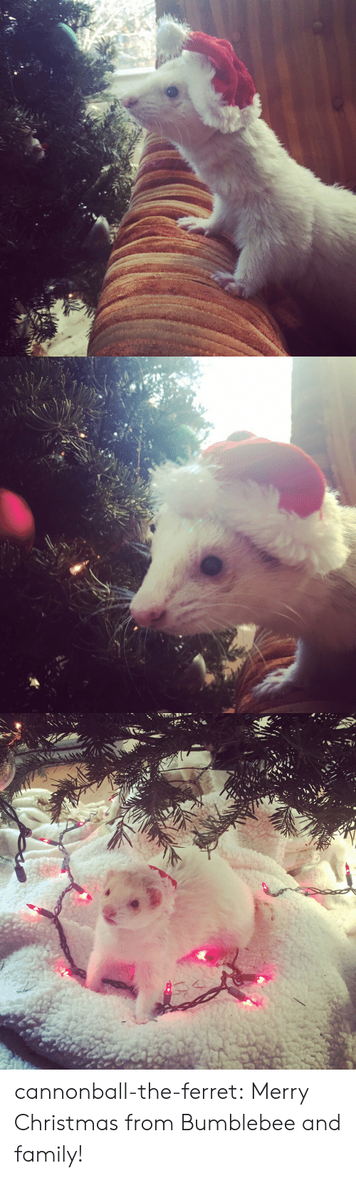 bumblebee: cannonball-the-ferret:  Merry Christmas from Bumblebee and family!