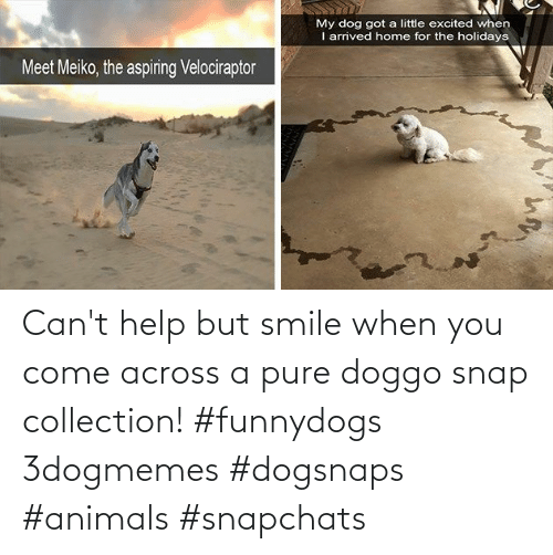Smile: Can't help but smile when you come across a pure doggo snap collection! #funnydogs 3dogmemes #dogsnaps #animals #snapchats