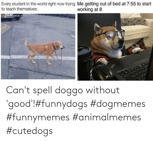 funnymemes: Can't spell doggo without 'good'!#funnydogs #dogmemes #funnymemes #animalmemes #cutedogs