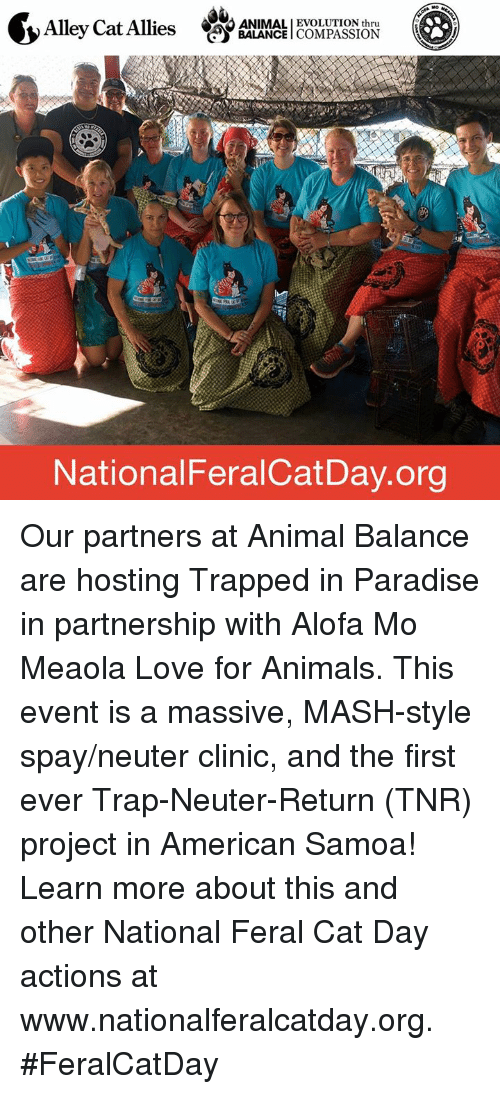 alley cats: CAO ANIMALI EVOLUTION thru  Alley Cat Allies  BALANCE  COMPASSION  National FeralCatDay.org Our partners at Animal Balance are hosting Trapped in Paradise in partnership with Alofa Mo Meaola Love for Animals. This event is a massive, MASH-style spay/neuter clinic, and the first ever Trap-Neuter-Return (TNR) project in American Samoa!    Learn more about this and other National Feral Cat Day actions at www.nationalferalcatday.org. #FeralCatDay