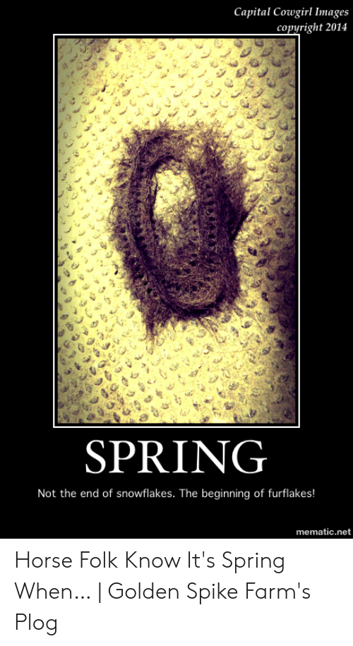 Golden Spike: Capital Cowgirl Images  copyright 2014  SPRING  Not the end of snowflakes. The beginning of furflakes!  mematic.net Horse Folk Know It's Spring When… | Golden Spike Farm's Plog