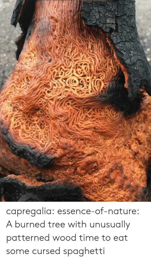 burned: capregalia:  essence-of-nature:   A burned tree with unusually patterned wood    time to eat some cursed spaghetti