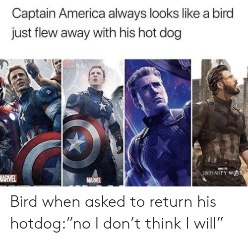"hotdog: Captain America always looks like a bird  just flew away with his hot dog  INFINITY WOR  MARVEL  MARVEL Bird when asked to return his hotdog:""no I don't think I will"""