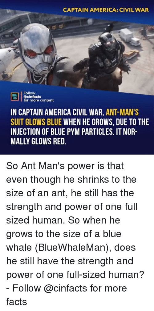 blue whale: CAPTAIN AMERICA: CIVIL WAR  Follow  OINENA  ACTS  REB İ | @cinfacts  for more content  IN CAPTAIN AMERICA CIVIL WAR, ANT-MAN'S  SUIT GLOWS BLUE WHEN HE GROWS, DUE TO THE  INJECTION OF BLUE PYM PARTICLES. IT NOR-  MALLY OLOWS RED So Ant Man's power is that even though he shrinks to the size of an ant, he still has the strength and power of one full sized human. So when he grows to the size of a blue whale (BlueWhaleMan), does he still have the strength and power of one full-sized human?⠀ -⠀ Follow @cinfacts for more facts