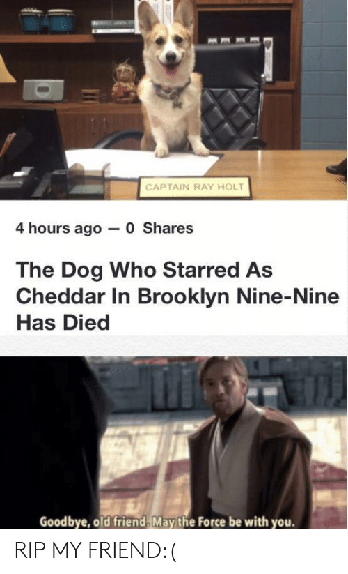 Nine Nine: CAPTAIN RAY HOLT  4 hours ago 0 Shares  The Dog Who Starred As  Cheddar In Brooklyn Nine-Nine  Has Died  Goodbye, old friend, May the Force be with you. RIP MY FRIEND:(