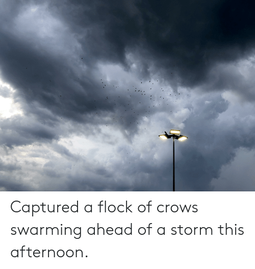 Storm, Crows, and This: Captured a flock of crows swarming ahead of a storm this afternoon.