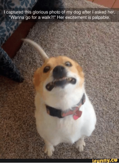 """Wanna Go For A Walk: captured this glorious photo of my dog after l asked her,  """"Wanna go for a walk?!"""" Her excitement is palpable.  funny CO"""