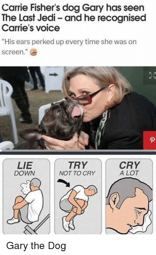"Jedi, Time, and Voice: Carrie Fisher's dog Gary has seen  The Last Jedi- and he recognised  Carrie's voice  ""His ears perked up every time she was on  screen.  ""  LIE  DOWN  TRY  NOT TO CRY  CRY  A LOT <p>Gary the Dog</p>"
