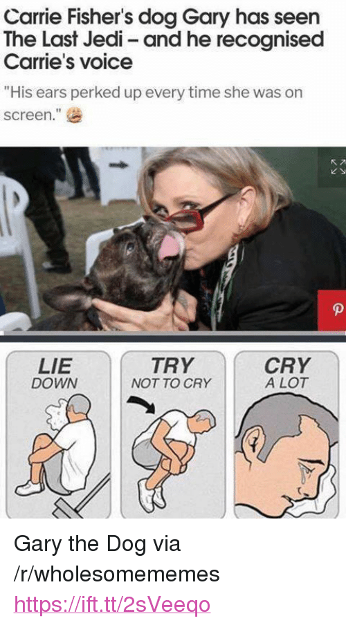 "Jedi, Time, and Voice: Carrie Fisher's dog Gary has seen  The Last Jedi- and he recognised  Carrie's voice  ""His ears perked up every time she was on  screen.  ""  LIE  DOWN  TRY  NOT TO CRY  CRY  A LOT <p>Gary the Dog via /r/wholesomememes <a href=""https://ift.tt/2sVeeqo"">https://ift.tt/2sVeeqo</a></p>"