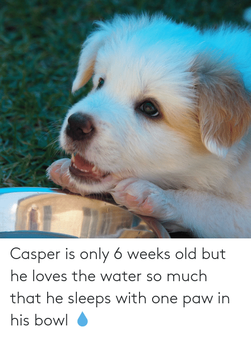 Casper: Casper is only 6 weeks old but he loves the water so much that he sleeps with one paw in his bowl 💧