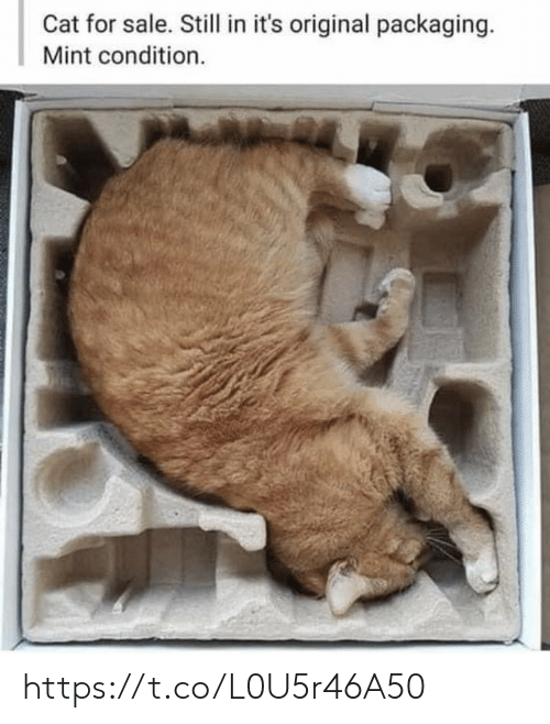Condition: Cat for sale. Still in it's original packaging.  Mint condition. https://t.co/L0U5r46A50