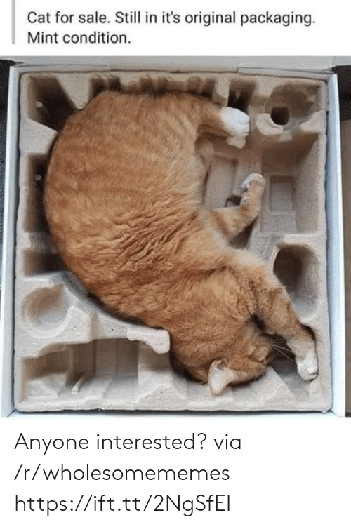 Condition: Cat for sale. Still in it's original packaging.  Mint condition. Anyone interested? via /r/wholesomememes https://ift.tt/2NgSfEI