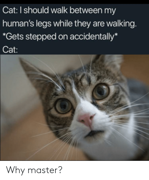 walking: Cat: I should walk between my  human's legs while they are walking.  *Gets stepped on accidentally*  Cat: Why master?