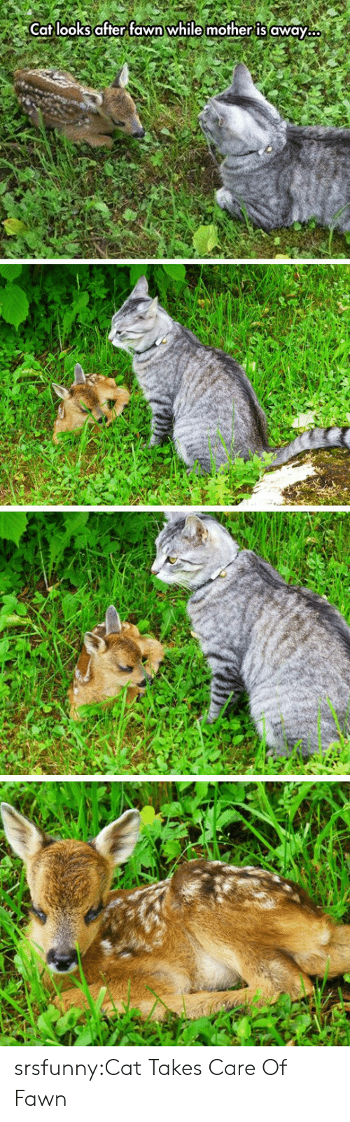 Tumblr, Blog, and Net: Cat looks after fawn while mother is away. srsfunny:Cat Takes Care Of Fawn
